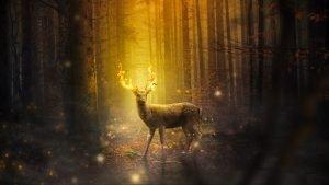 cervo in un bosco con le corna in fiamme