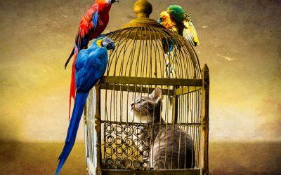 un gatto in gabbia e fuori dei pappagalli appoggiati sulla gabbia
