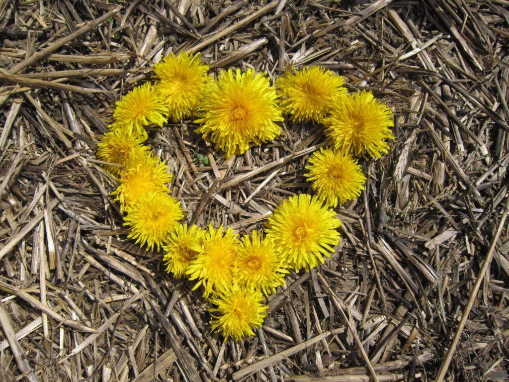 cuore formato con fiori gialli sopra la paglia