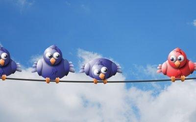 tre uccelli blu su in filo osservano un altro uccello rosso