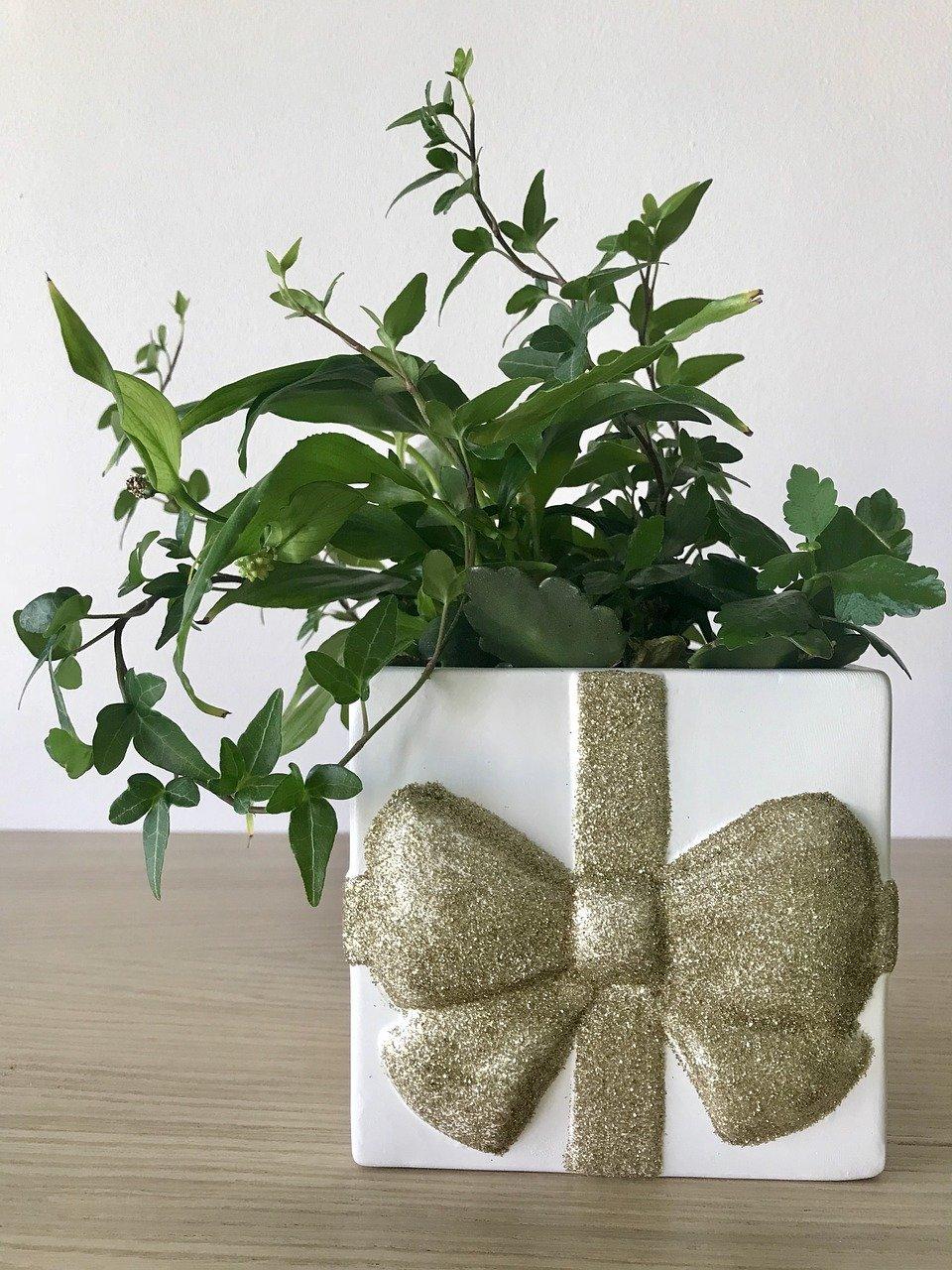 immagine di una pianta rigogliosa posta in un vaso a forma di pacco regalo