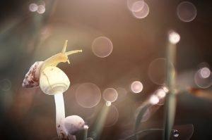 una lumaca arrampicata su un piccolo fungo a stelo sottile