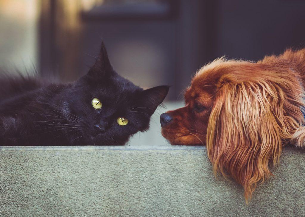 un gatto nero accanto ad un cane marrone