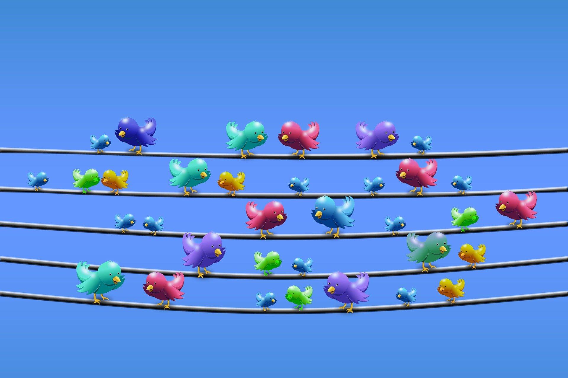 molti uccelli colorati su dei fili appesi chiacchierando tra di loro