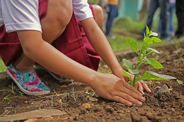 Una persona si prende cura di una pianta che dovrà crescere