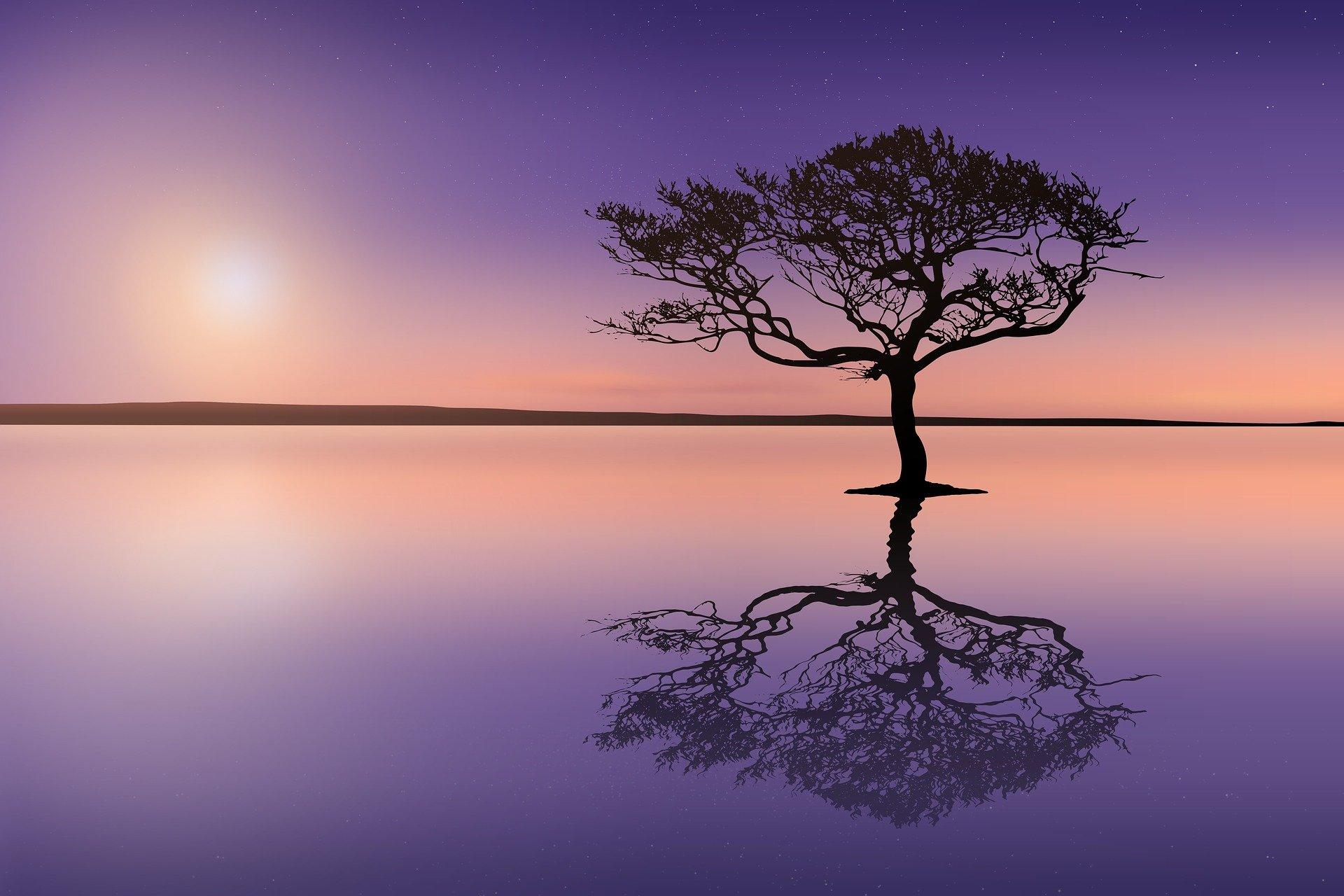 tramonto con un albero in mezzo all'acqua sulla quale si riflette