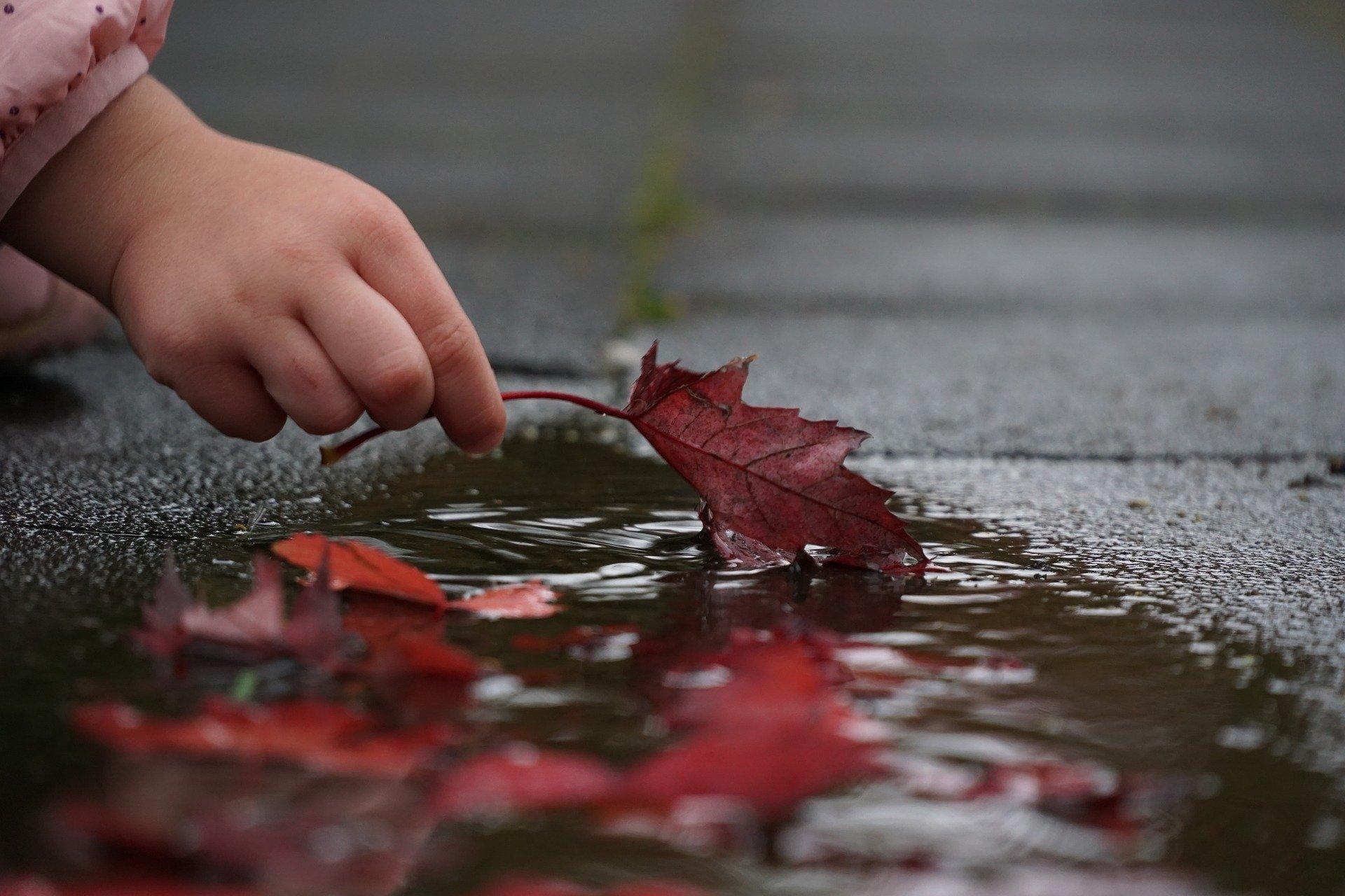 la mano di un bambino che prende una foglia rossa da una pozzanghera