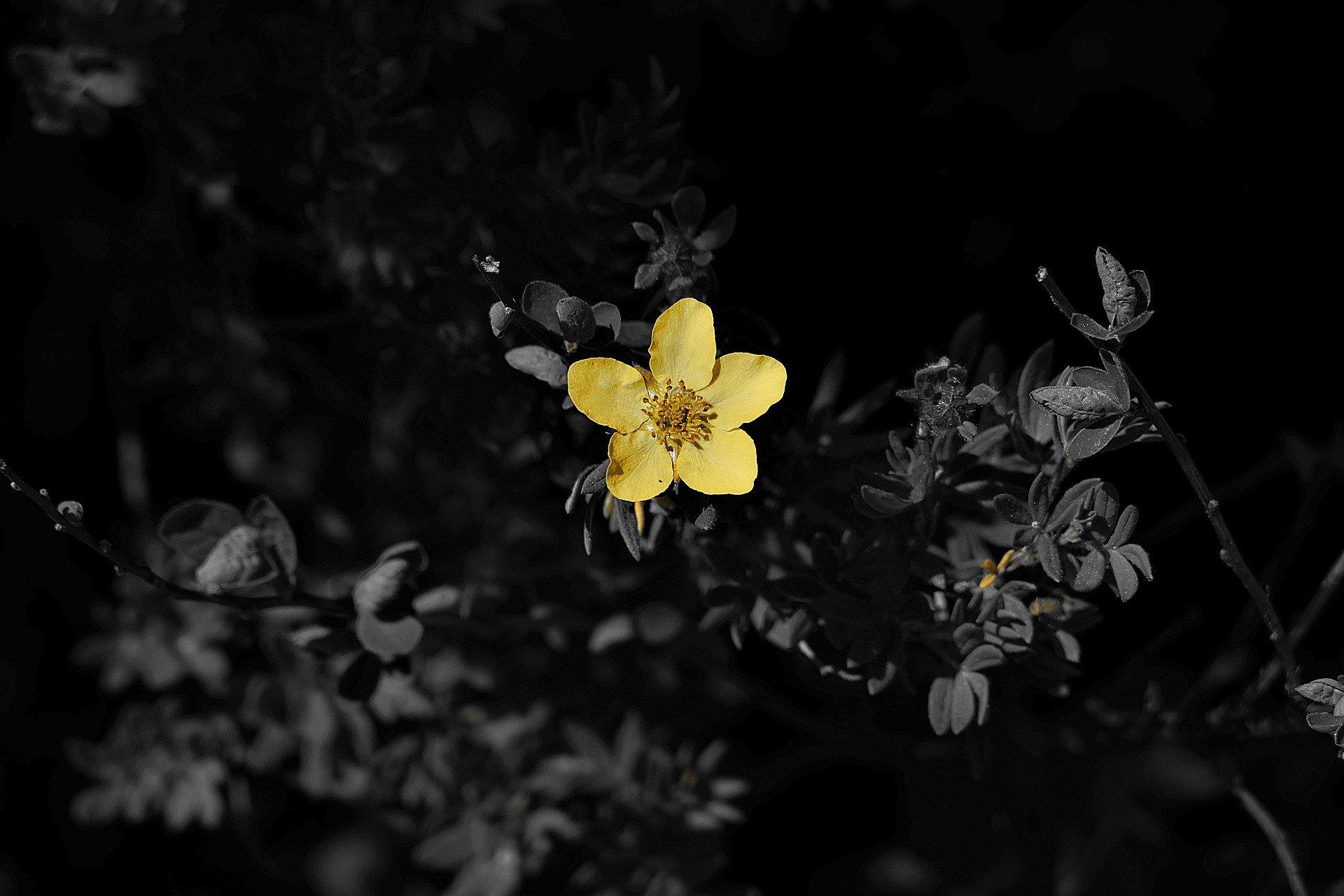 un fiore giallo in mezzo alla vegetazione nera