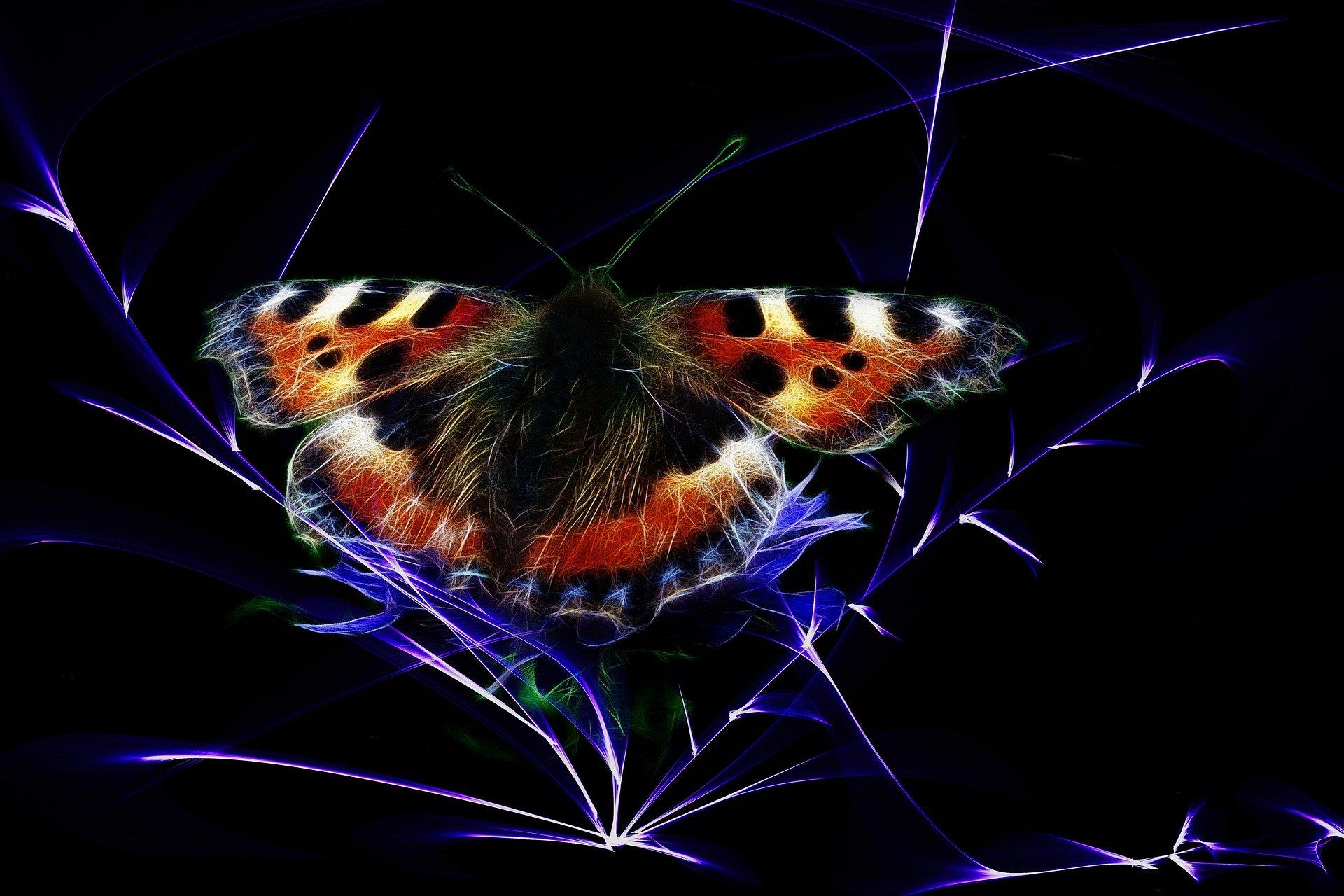 una farfalla colorata su sfondo nero
